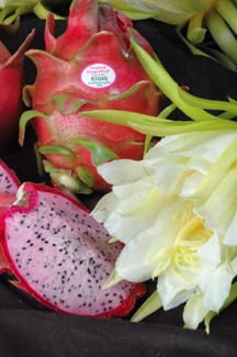 Tropical Dragonfruit | Distributor Info